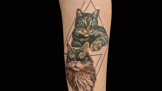 gatto we