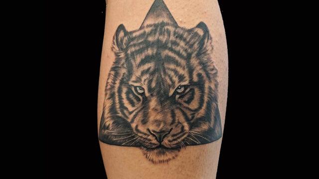 leone triangolo web